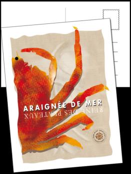 L'araignée de mer ou Maja brachydactyla vit au large des côtes du morbihan et se retrouve dans les assiettes des bretons.