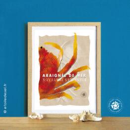 affiche de l'araignée de mer dans son cadre naturel